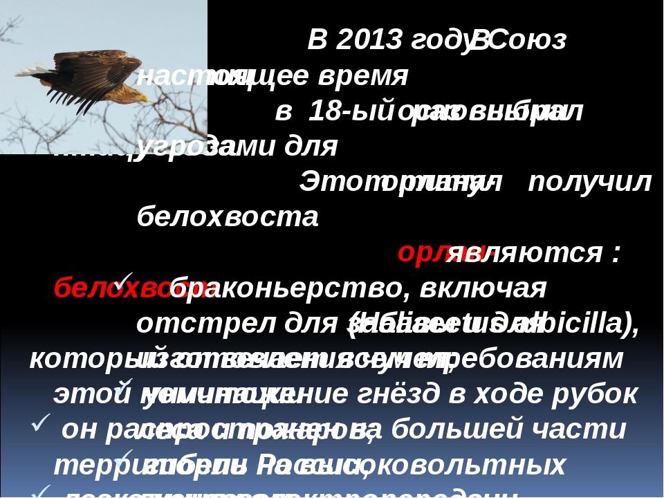 В 2013 году Союз охраны птиц в 18-ый раз выбрал птицу года. Этот титул получ...