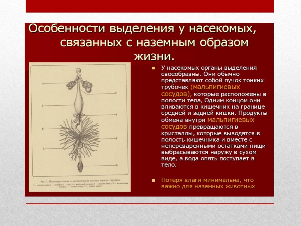 """Урок """"Значение процессов выделения в организме"""""""