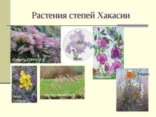 Растения степей Хакасии Ковыль степной Ирис Душистый горошек Чина луговая Кос