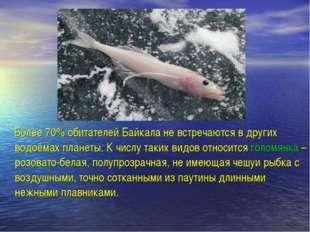 Более 70% обитателей Байкала не встречаются в других водоёмах планеты. К чис
