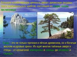 Большую хозяйственную ценность имеют древесные ресурсы тайги прибайкальских х