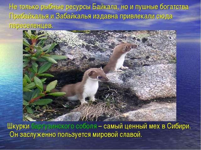 Не только рыбные ресурсы Байкала, но и пушные богатства Прибайкалья и Забайка...
