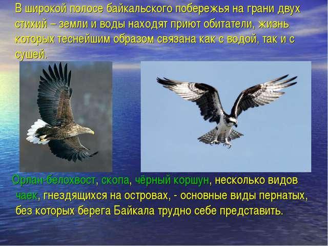 В широкой полосе байкальского побережья на грани двух стихий – земли и воды н...