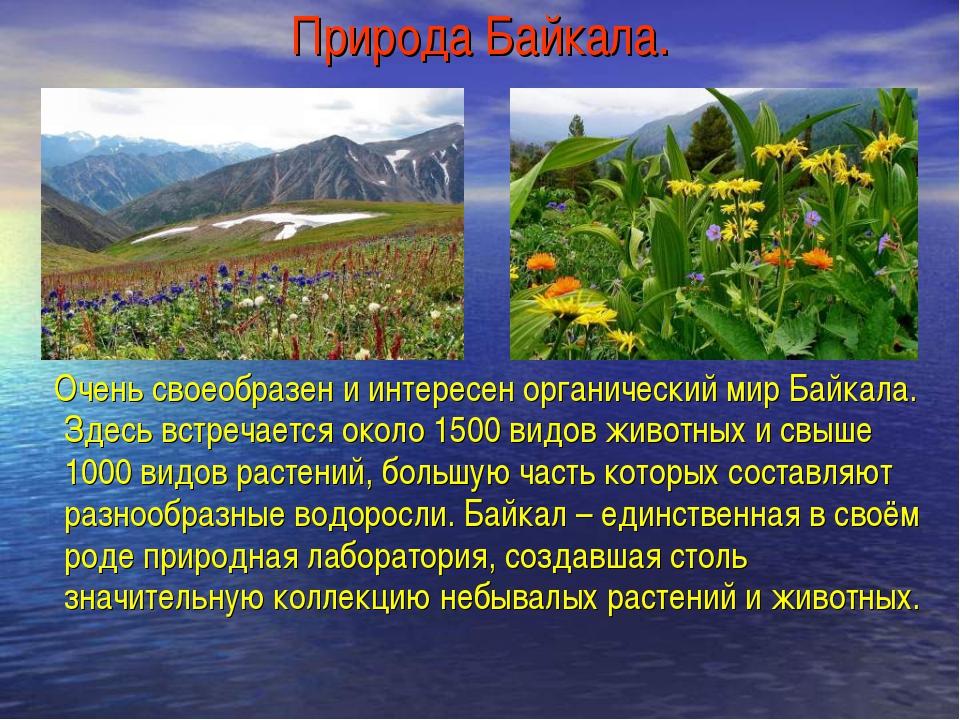 Природа Байкала. Очень своеобразен и интересен органический мир Байкала. Здес...