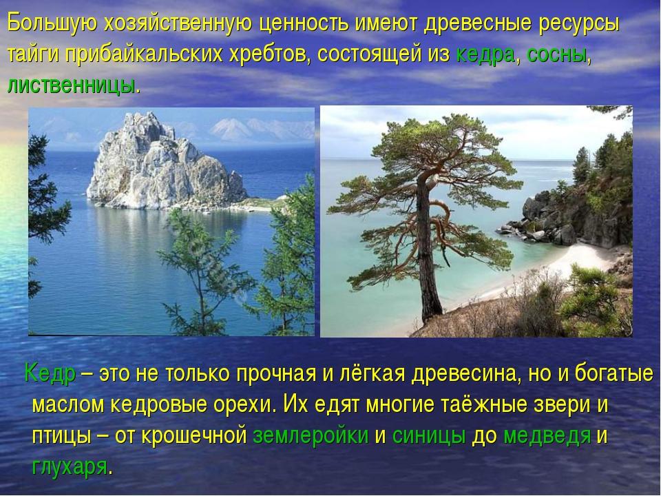 Большую хозяйственную ценность имеют древесные ресурсы тайги прибайкальских х...