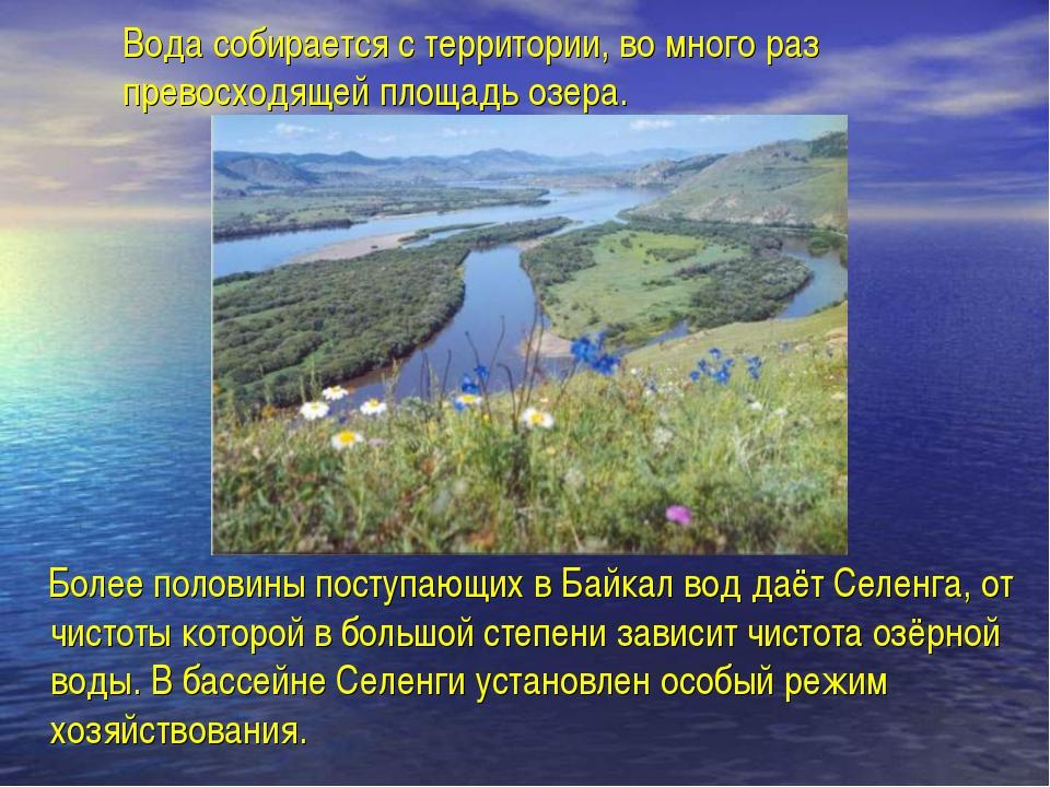 Вода собирается с территории, во много раз превосходящей площадь озера. Более...