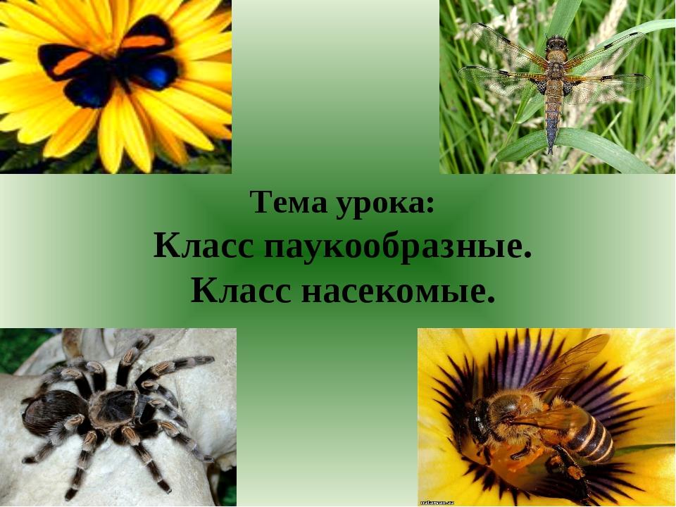 Тема урока: Класс паукообразные. Класс насекомые.