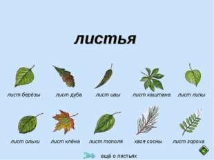 листья  лист берёзы лист дуба лист ивы лист каштана лист липы лист гороха хв