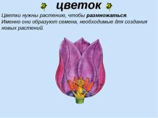 цветок Цветки нужны растению, чтобы размножаться. Именно они образуют семена,