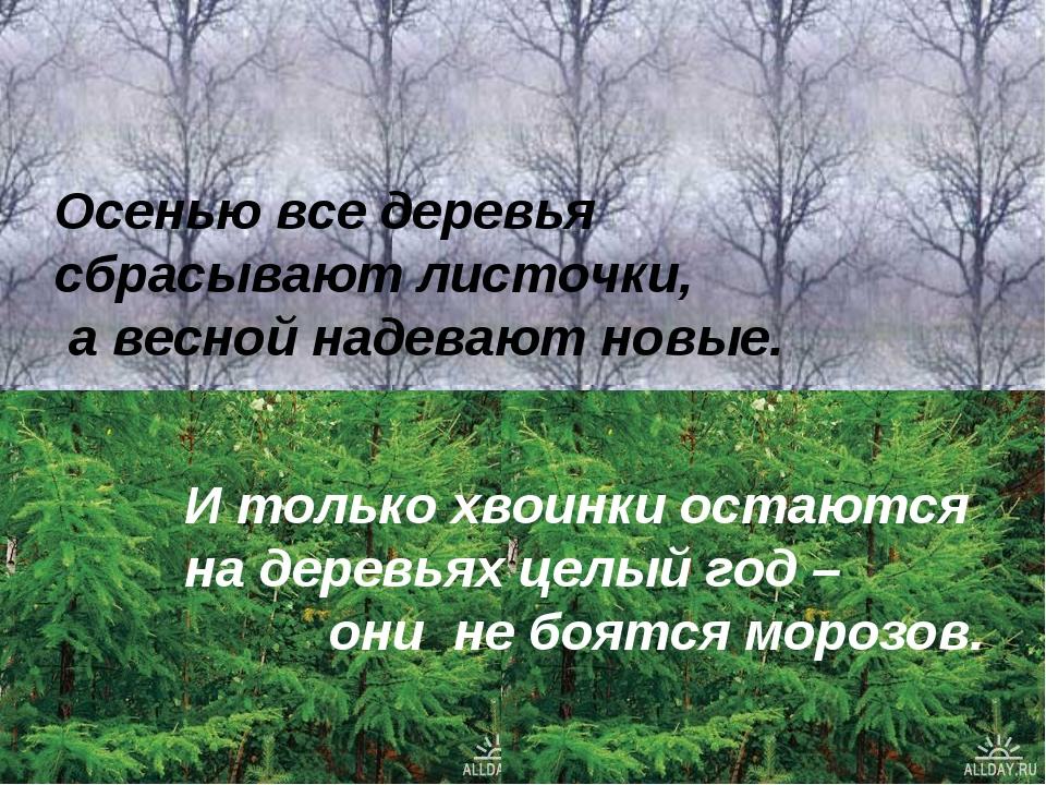 Осенью все деревья сбрасывают листочки, а весной надевают новые. И только хво...