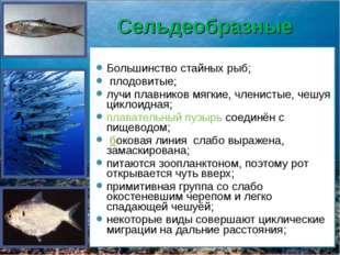 Сельдеобразные Большинство стайных рыб; плодовитые; лучи плавников мягкие, чл