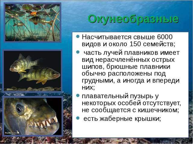 Окунеобразные Насчитывается свыше 6000 видов и около 150 семейств; часть луче...