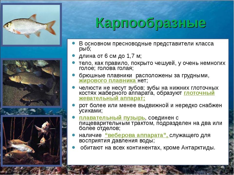 Карпообразные В основном пресноводные представители класса рыб; длина от 6 см...