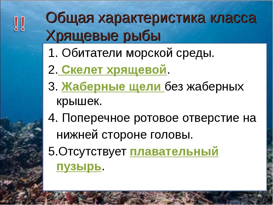 Общая характеристика класса Хрящевые рыбы 1. Обитатели морской среды. 2. Скел...
