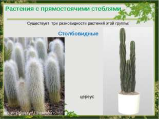 Растения с прямостоячими стеблями Существует три разновидности растений этой