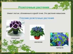 Розеточные растения Имеют листья, сближенные в одной точке. Эти растения невы
