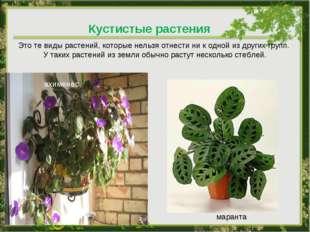 Кустистые растения Это те виды растений, которые нельзя отнести ни к одной из