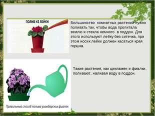 Большинство комнатных растений нужно поливать так, чтобы вода пропитала землю