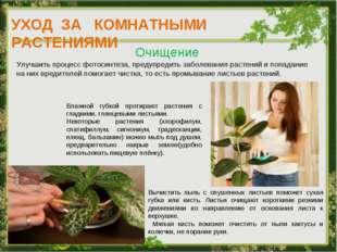 УХОД ЗА КОМНАТНЫМИ РАСТЕНИЯМИ Очищение Улучшить процесс фотосинтеза, предупре