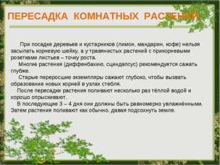 ПЕРЕСАДКА КОМНАТНЫХ РАСТЕНИЙ При посадке деревьев и кустарников (лимон, манда