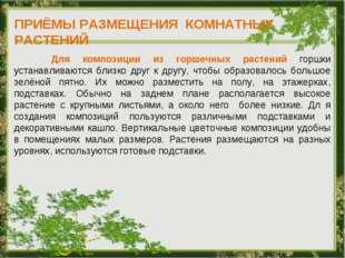 ПРИЁМЫ РАЗМЕЩЕНИЯ КОМНАТНЫХ РАСТЕНИЙ Для композиции из горшечных растений гор