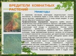 ВРЕДИТЕЛИ КОМНАТНЫХ РАСТЕНИЙ Нематоды О поражении листовыми нематодами свидет