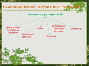 РАЗНОВИДНОСТИ КОМНАТНЫХ РАСТЕНИЙ Основные группы растений Декоративно- листве