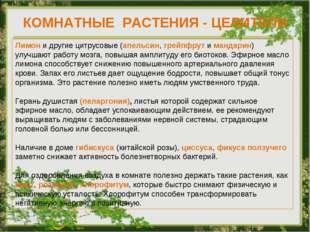 КОМНАТНЫЕ РАСТЕНИЯ - ЦЕЛИТЕЛИ Лимон и другие цитрусовые (апельсин, грейпфрут