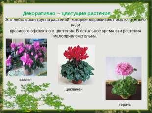 Декоративно – цветущие растения Это небольшая группа растений, которые выращи