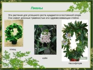 Лианы Эти растения для успешного роста нуждаются в постоянной опоре. Они имею