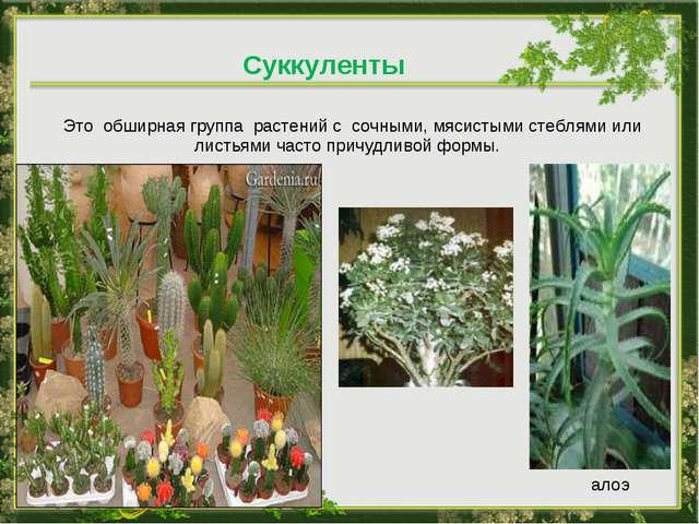 Это обширная группа растений с сочными, мясистыми стеблями или листьями част...