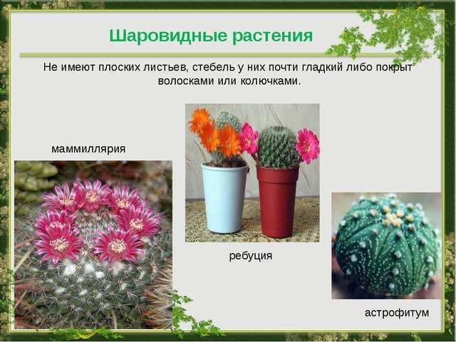 Шаровидные растения Не имеют плоских листьев, стебель у них почти гладкий либ...