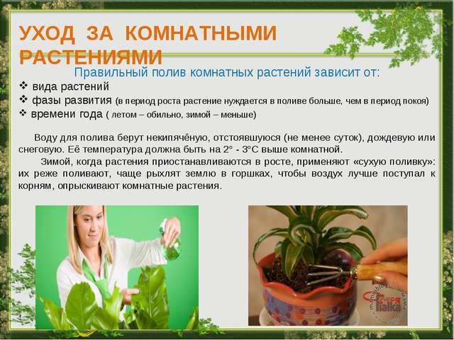 УХОД ЗА КОМНАТНЫМИ РАСТЕНИЯМИ Правильный полив комнатных растений зависит от:...