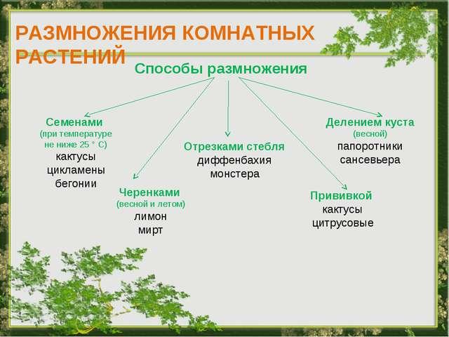 РАЗМНОЖЕНИЯ КОМНАТНЫХ РАСТЕНИЙ Способы размножения Семенами (при температуре...