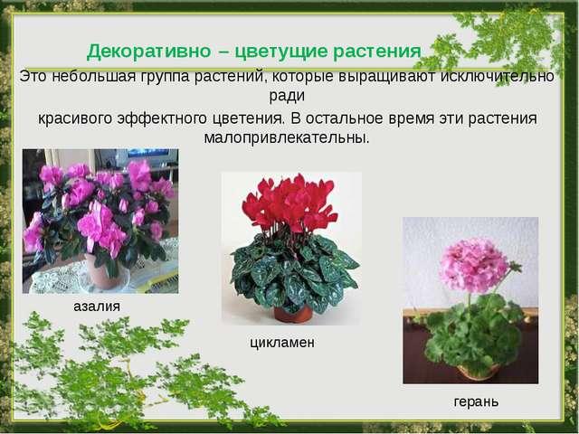 Декоративно – цветущие растения Это небольшая группа растений, которые выращи...