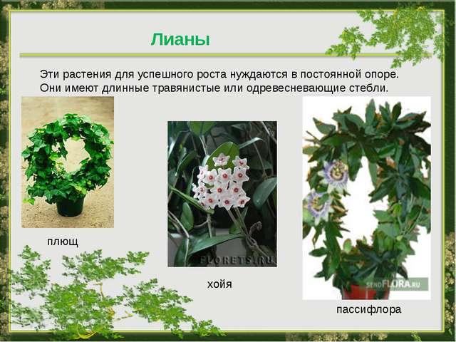 Лианы Эти растения для успешного роста нуждаются в постоянной опоре. Они имею...