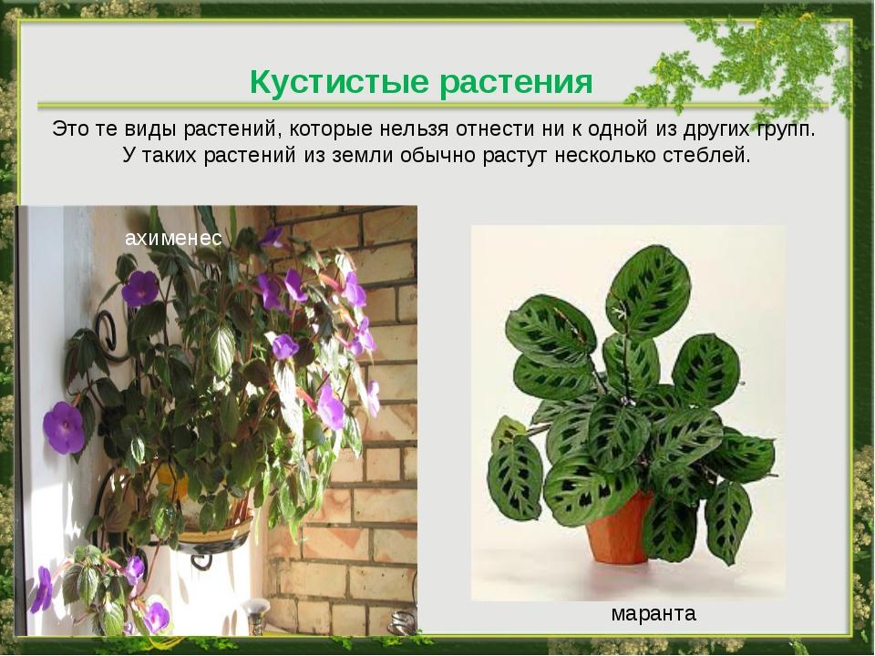 Кустистые растения Это те виды растений, которые нельзя отнести ни к одной из...