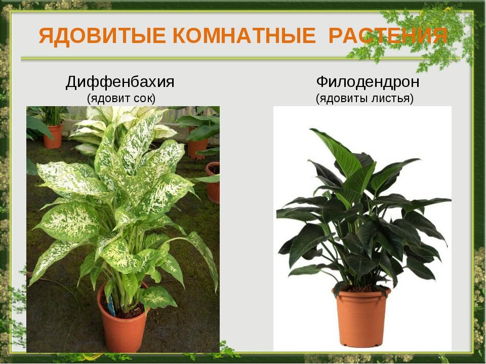 виды комнатных растений с фото и названиями очистку