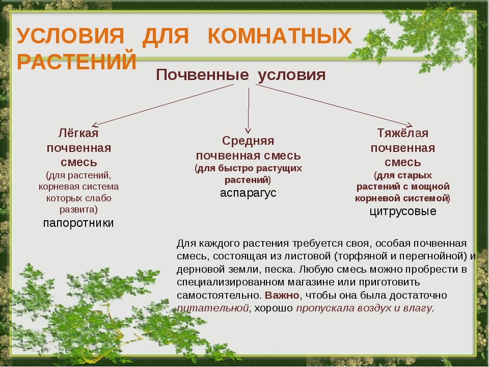 УСЛОВИЯ ДЛЯ КОМНАТНЫХ РАСТЕНИЙ Почвенные условия Лёгкая почвенная смесь (для...