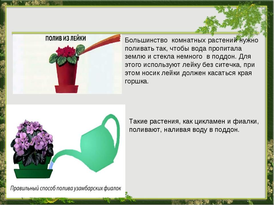 Большинство комнатных растений нужно поливать так, чтобы вода пропитала землю...