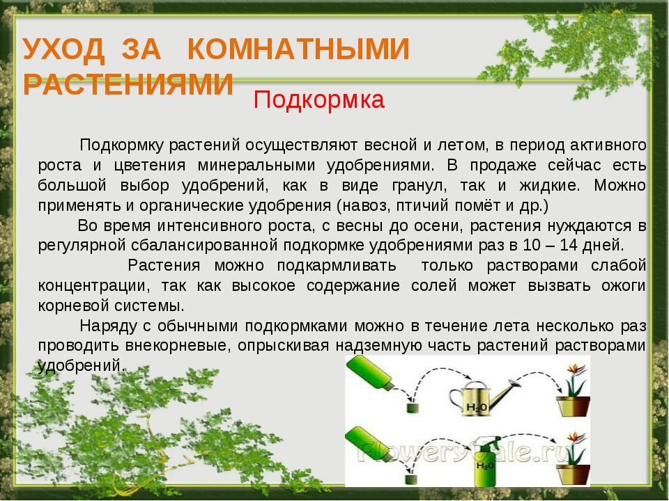 УХОД ЗА КОМНАТНЫМИ РАСТЕНИЯМИ Подкормка Подкормку растений осуществляют весно...