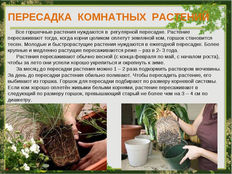 ПЕРЕСАДКА КОМНАТНЫХ РАСТЕНИЙ Все горшечные растения нуждаются в регулярной пе...