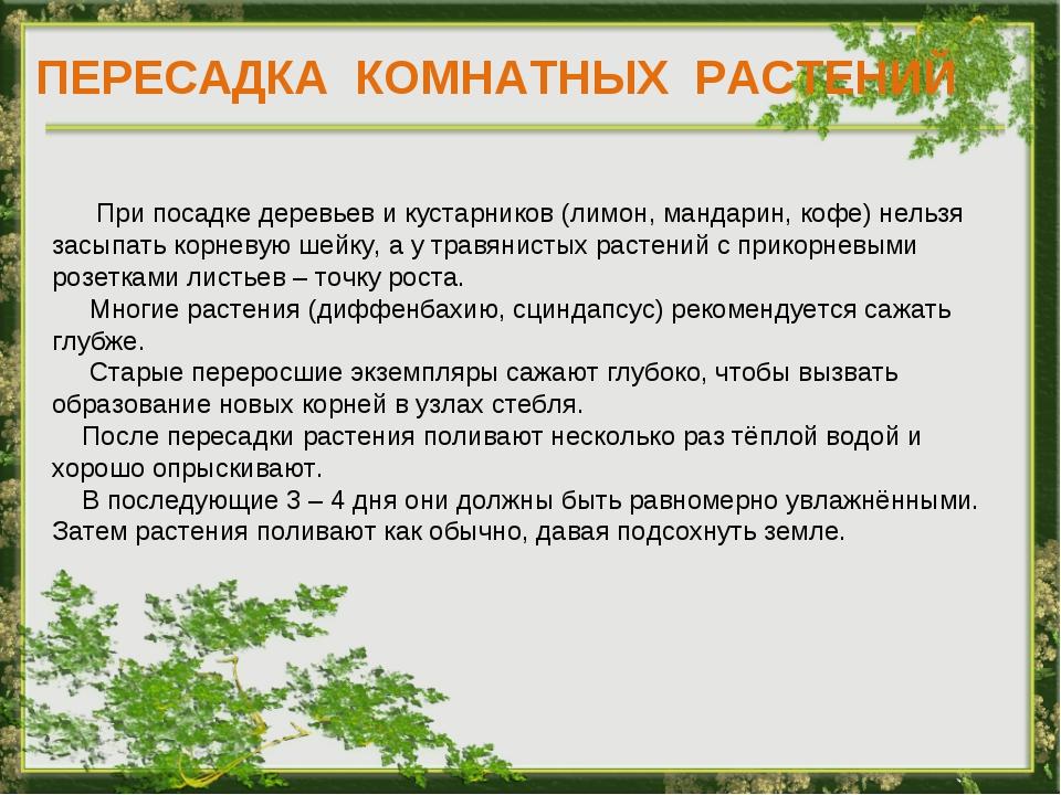 ПЕРЕСАДКА КОМНАТНЫХ РАСТЕНИЙ При посадке деревьев и кустарников (лимон, манда...