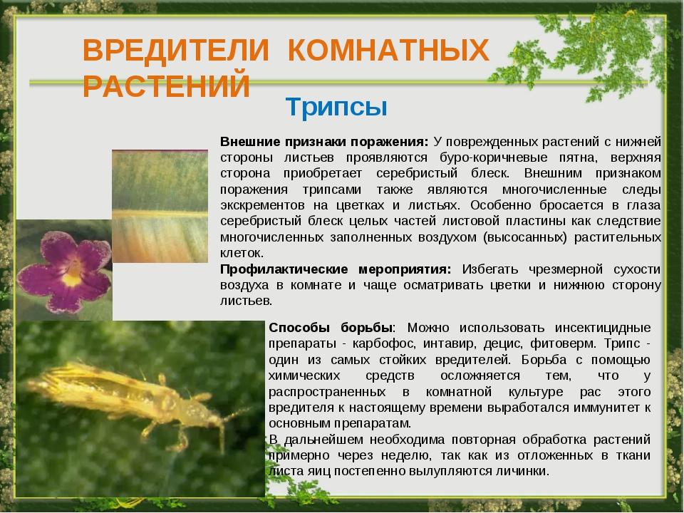 Вредители комнатных цветов фото описание