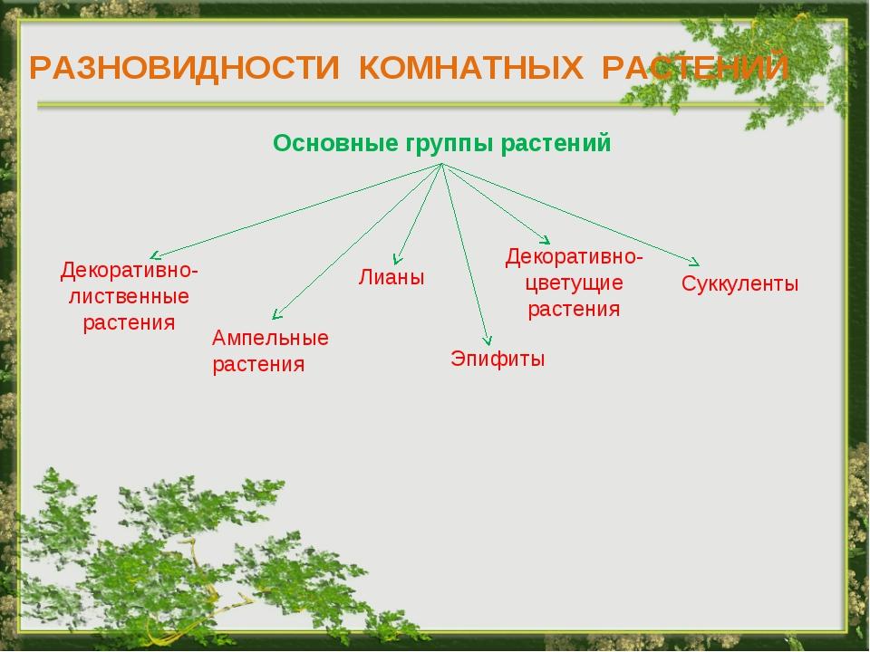 РАЗНОВИДНОСТИ КОМНАТНЫХ РАСТЕНИЙ Основные группы растений Декоративно- листве...