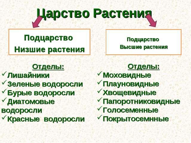 Картинки по запросу классификация растений