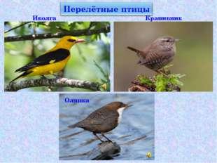 Иволга Крапивник Оляпка