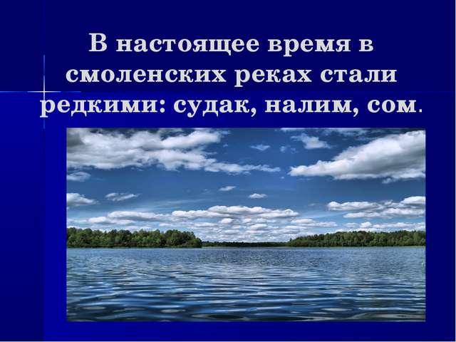 В настоящее время в смоленских реках стали редкими: судак, налим, сом.