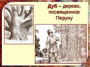 Дуб – дерево, посвященное Перуну