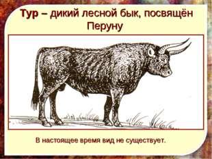 Тур – дикий лесной бык, посвящён Перуну В настоящее время вид не существует.